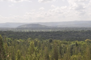 Part of the thick Kakamega Forest. Very green and beautiful. #TembeaKenya.