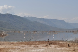 Lake Bogoria sits between hills and small islands in the beautiful landscape of Rift Valley. #TembeaKenya.