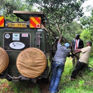 The van got stuck when we tried accessing buffaloes at the Mt Elgon National Park. #TembeaKenya.