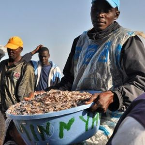 A fisherman in Lake Victoria displays his catch,the popular Omena delicacy. #TembeaKenya.